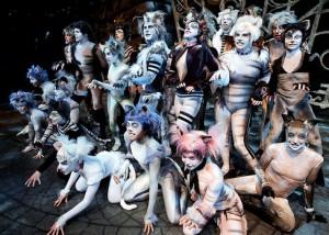 Cats-cirkus